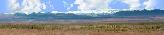 Picture of Alaskan denali national park left