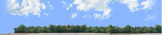 Picture of Cotton fields with treeline vista left