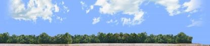 Picture of Cotton fields with treeline vista right