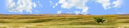 Picture of Buffalo gap national grasslands south dakota right repeatable