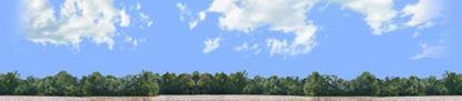 Picture of Cotton fields with treeline left repeatable