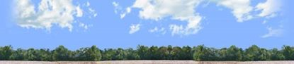 Picture of Cotton fields with treeline right repeatable
