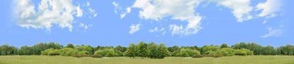 Picture of Treeline panorama 3 repeatable